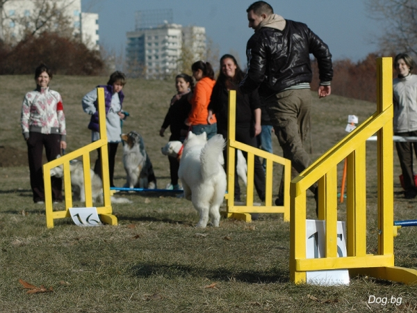 Agility Club Bulgaria 2011